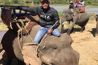 Veterinarian asks to stop elephant-riding tourism