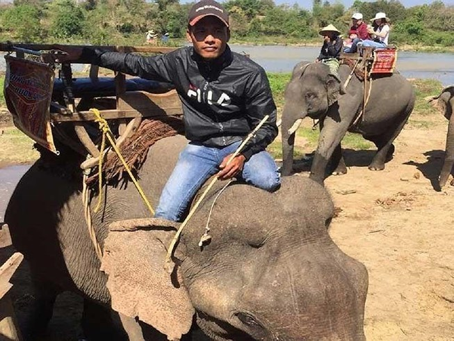 Veterinarian asks to stop elephant-riding tourism