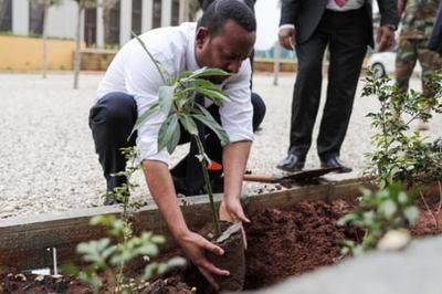 Ethiopia trồng 350 triệu cây mỗi ngày để giải quyết khủng hoảng khí hậu