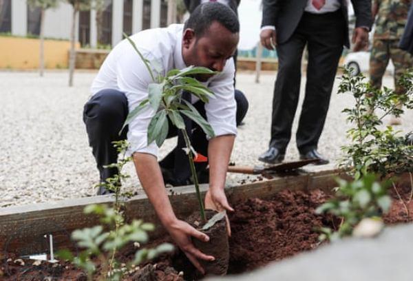 biến đổi khí hậu,suy thoái môi trường,trồng cây xanh