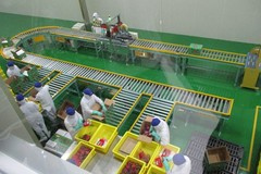 Businesses spend big money on fruit processing technology