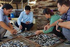 Quảng Trị tồn đọng cả ngàn tấn cá nục khô