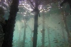 Khu rừng thời cổ đại 10.000 năm tuổi chìm dưới đáy biển