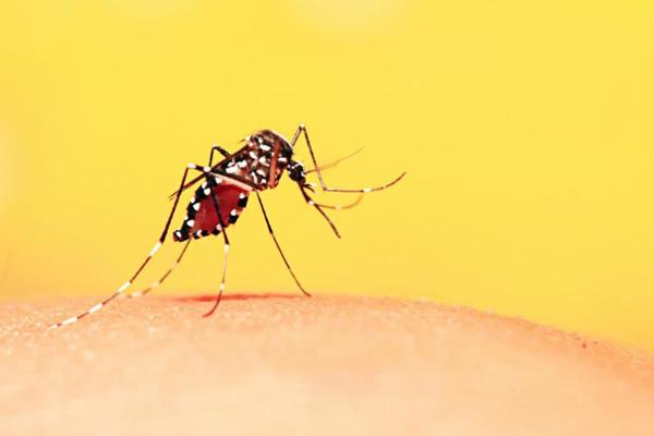 Triệu chứng dễ nhầm sốt xuất huyết và sốt thường, để lâu nguy hiểm tính mạng