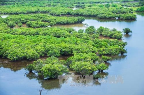 VN government issues decree on wetlands conservation