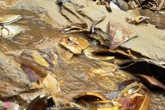 Chi 48 tỷ khai quật tàu cổ ở Dung Quất, thu về... toàn mảnh vỡ