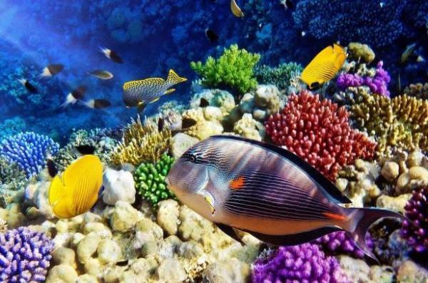 Sinh vật nào dưới đại dương sản sinh nhiều oxy nhất?