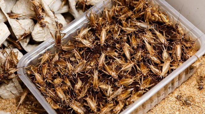 Nuôi côn trùng, bò sát thu tiền tỷ mỗi năm ở Hà Nội