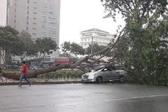 Nhà tốc mái, cây đổ la liệt sau trận giông lốc ở Sài Gòn