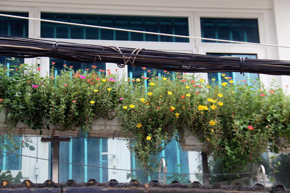 Phút xao lòng khi đi qua ngõ hoa lãng mạn giữa lòng thủ đô