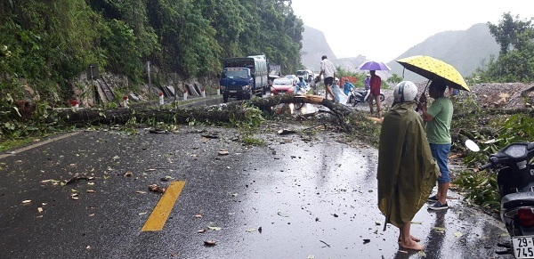 Mưa lớn, cây đổ chắn ngang quốc lộ 6 ở Hòa Bình
