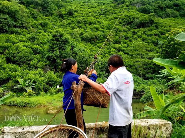 Đặc sản na Chi Lăng theo cáp treo 'bay vèo' từ trên núi xuống