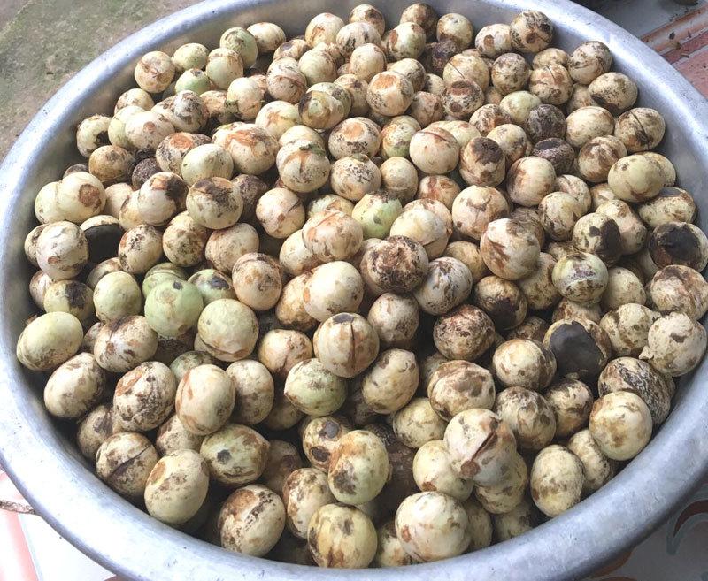 Quả rừng lạ về Hà Thành, đặc sản màu đen nấu bát canh mất 1 tiếng