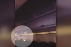 Dơi bay loạn xạ trong khoang khách máy bay