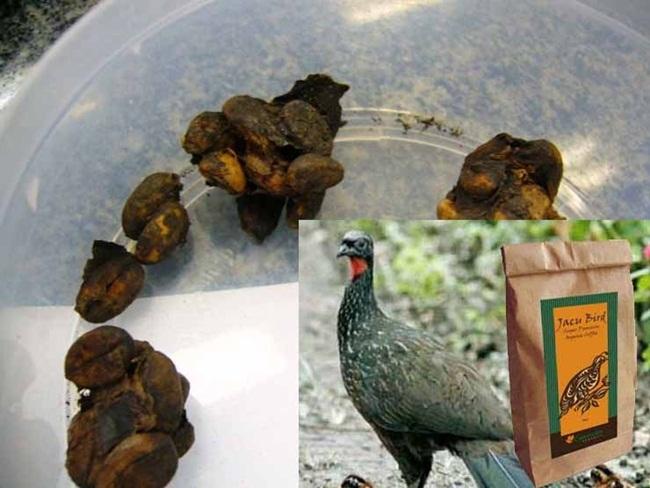 Thứ đắt hơn vàng trong phân chim, chăm đi nhặt về bán chục triệu dễ dàng