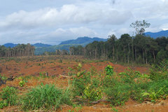 """Hơn 11.000 """"sổ đỏ"""" bị ách lại vì có nguồn gốc đất rừng"""