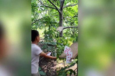 Xem bé trai phô diễn tuyệt kỹ ném bài cắt xuyên mảnh gỗ