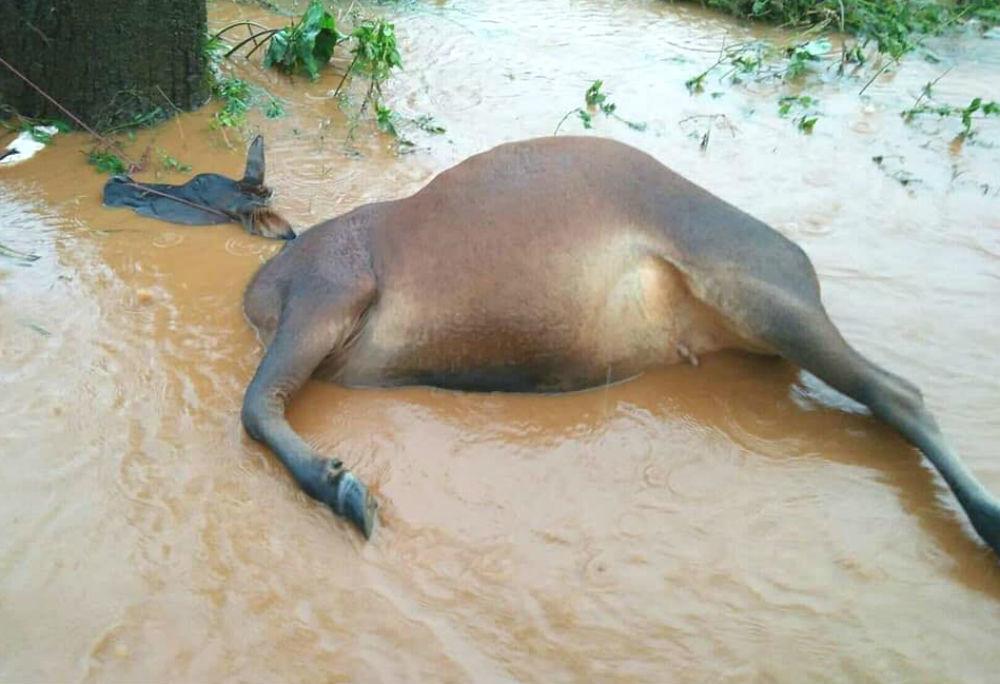 vỡ thủy điện,Đắk Nông,lũ lụt,mưa lũ