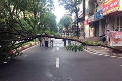 Cây đổ vắt ngang đường Hà Nội, lái xe tông vào tử vong tại chỗ