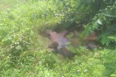 Thi thể nam giới phân hủy nặng bên bờ đê ở Quảng Ninh