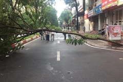 One killed by fallen tree in Hanoi