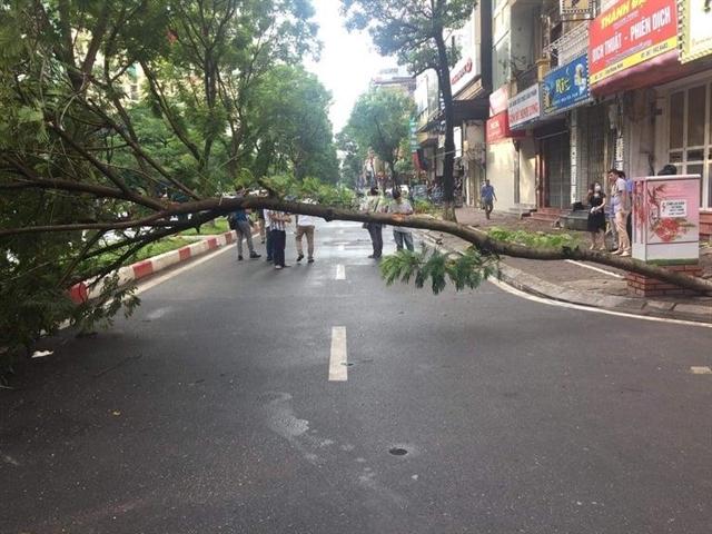 One killed by fallen tree in Hanoi