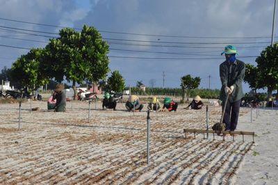 Đất đảo Lý Sơn thổi giá tăng gấp 30 lần