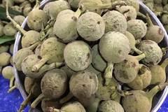 Săn lùng loại quả xấu xí mất tích, nhặt hạt đặc sản lạ màu đen