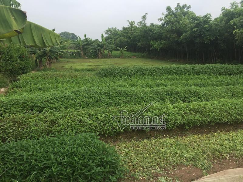 Sa lầy ở dự án 'ma', khách hàng trầy trật đòi hàng trăm tỷ mua đất