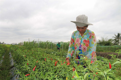 Climate-change adaptation models help farmers escape poverty