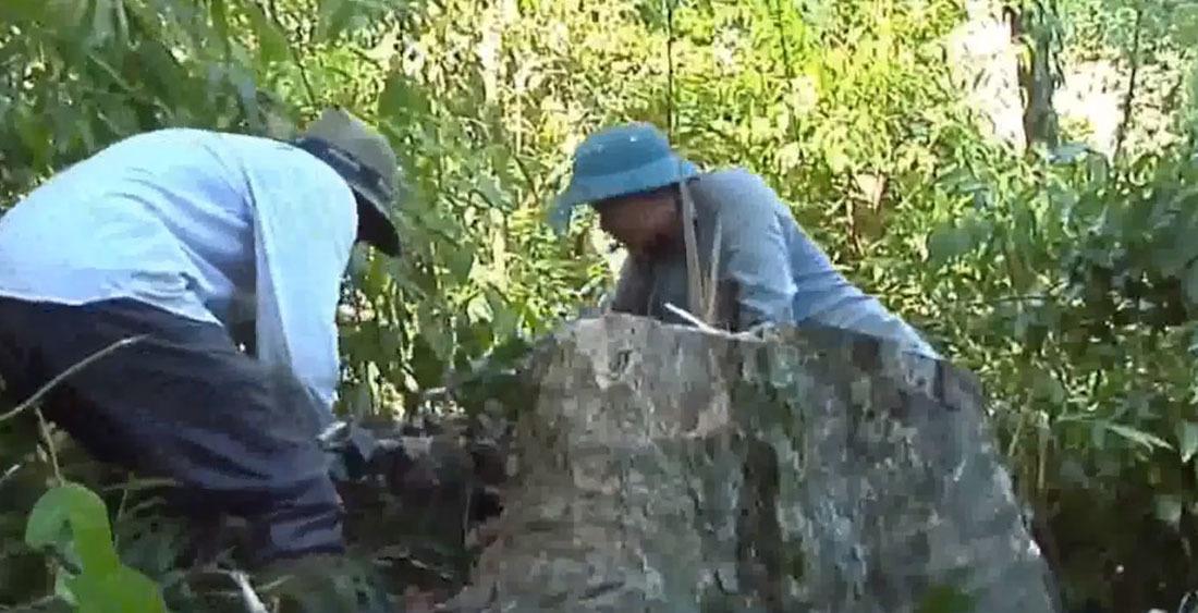 lâm tặc,phá rừng,Nghệ An,vườn quốc gia Pù Mát