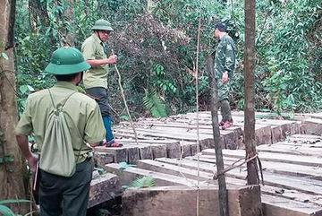 99 cây gỗ lớn bị xẻ thịt trong vườn quốc gia Pù Mát
