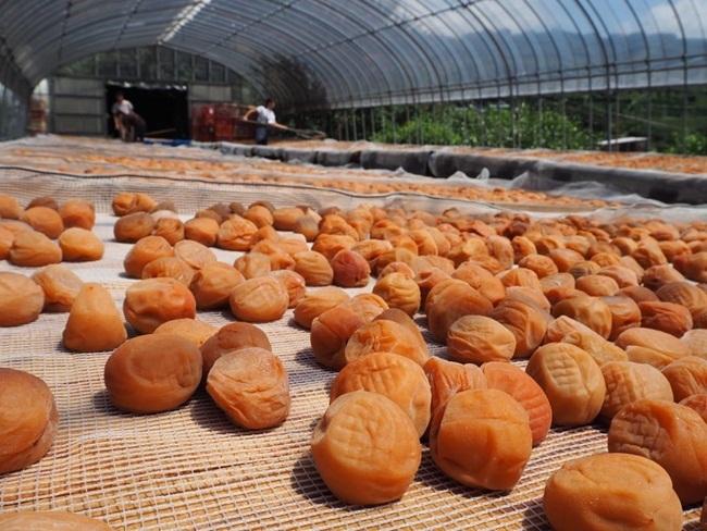 Muối quả giá rẻ có đầy ở Việt Nam, bán 22 triệu/hũ vừa ăn vừa sợ hết
