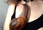 Cô gái cho ốc sên khổng lồ bò lên ngực gây sốt cộng đồng mạng