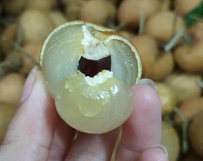 Nhãn bắp cải, hàng Việt cực hiếm, giá cực đắt có tiền khó mua