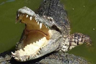 Bé trai bị cá sấu ăn thịt ngay trước mắt người thân