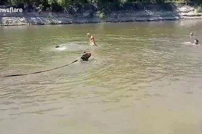 Xem gấu vừa tắm vừa đùa giỡn với người trên sông