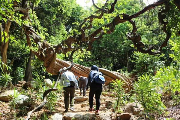 Son Tra Nature Reserve,central Vietnam's first forest school,Vietnam environment,climate change in Vietnam,Vietnam weather,Vietnam climate,pollution in Vietnam,environmental news,sci-tech news,vietnamnet bridge,english news,Vietnam news,vietnamnet news,Vi