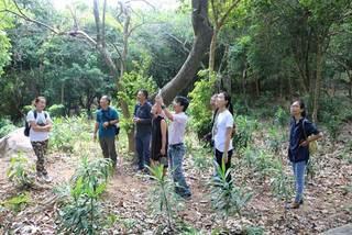 Forest school opens in Da Nang
