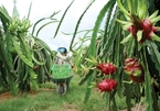 VN agriculture capitalising from private investment