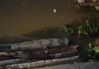 Quả bom nặng hơn 100kg nằm trơ dưới sông thả thiên nga ở Hải Phòng