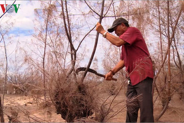 Drought in Phu Yen destroys several hectares of forest