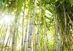 VN sugar companies anticipate big difficulties from ATIGA
