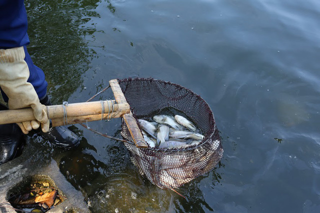 Mass fish deaths,Truc Bach Lake,Yen So Lake,Vietnam environment,climate change in Vietnam,Vietnam weather,Vietnam climate,pollution in Vietnam