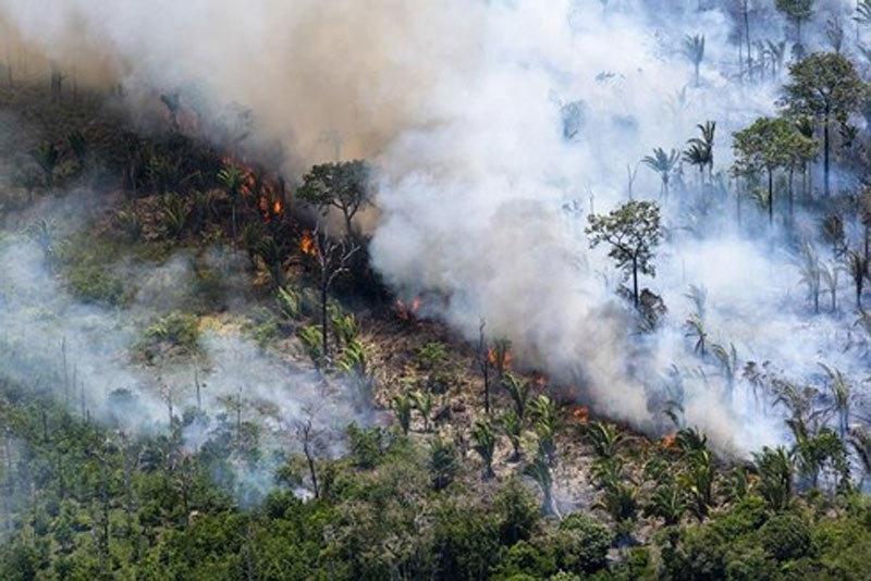 Những hình ảnh đau đớn vì cháy rừng Amazon