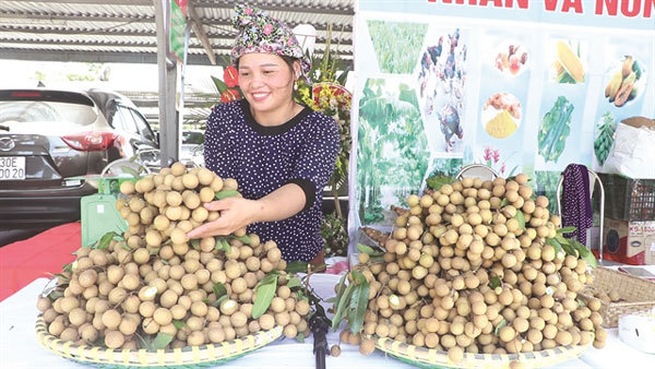 Why you should have a longing for longan