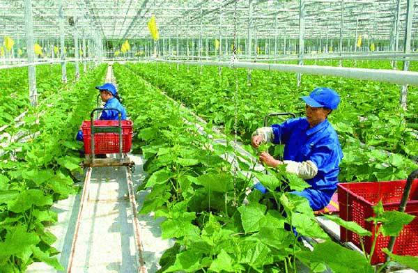 Labour export in agricultural: a golden chance for Vietnamese farmers