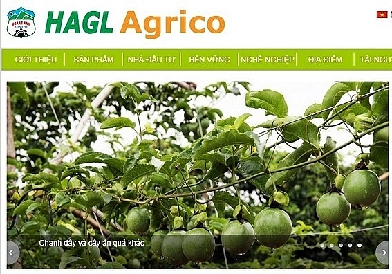 Hoang Anh Gia Lai Agrico continues selling subsidiary