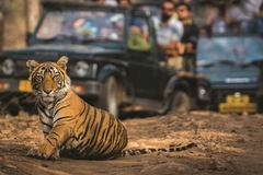 What is the fate of tigers in Vietnam?