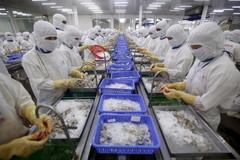 30 doanh nghiệp Việt xuất khẩu tôm sang Mỹ hưởng thuế 0%